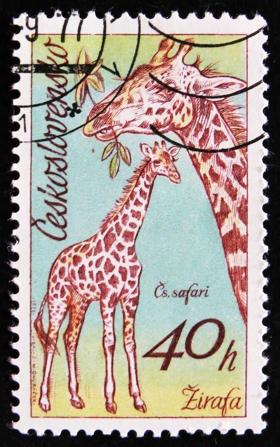 Giraf, een reeks Afrikaanse dieren in de Dierentuin van Dvur Kralove, circa 1976 stock foto