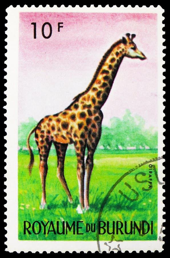 Giraf (Giraffa-camelopardalis), Dieren serie, circa 1964 stock fotografie