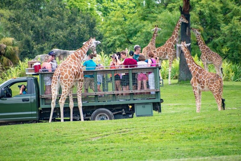 Giraf het wachten slabladeren van mensen die, safari bij Busch-Tuinen 8 genieten van stock foto's