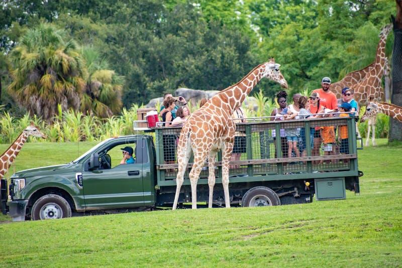 Giraf het wachten slabladeren van mensen die, safari bij Busch-Tuinen 5 genieten van stock afbeeldingen