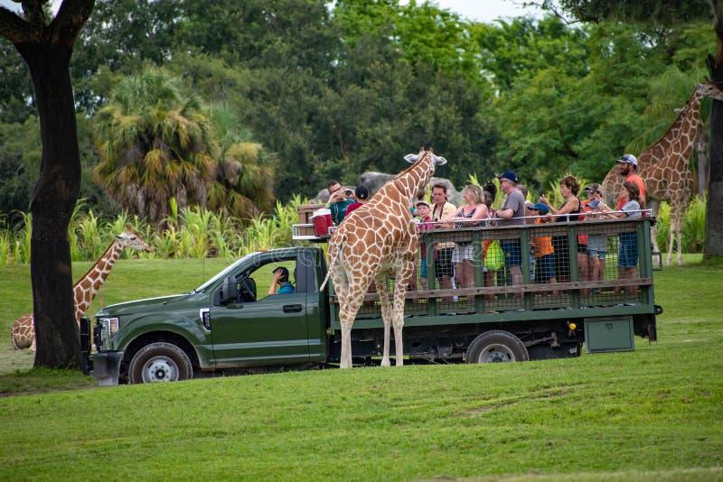 Giraf het wachten slabladeren van mensen die, safari bij Busch-Tuinen 2 genieten van royalty-vrije stock afbeelding