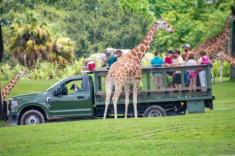 Giraf het wachten slabladeren van mensen die, safari bij Busch-Tuinen 7 genieten van royalty-vrije stock fotografie