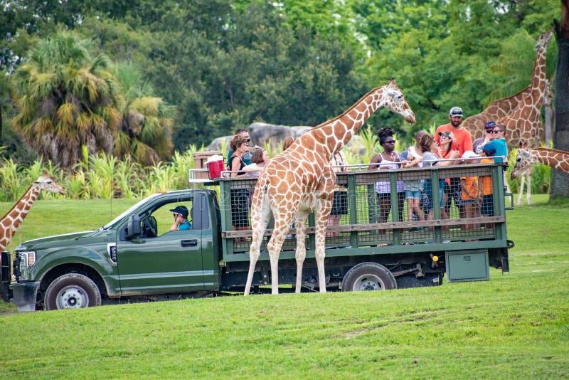 Giraf het wachten slabladeren van mensen die, safari bij Busch-Tuinen 6 genieten van royalty-vrije stock foto's