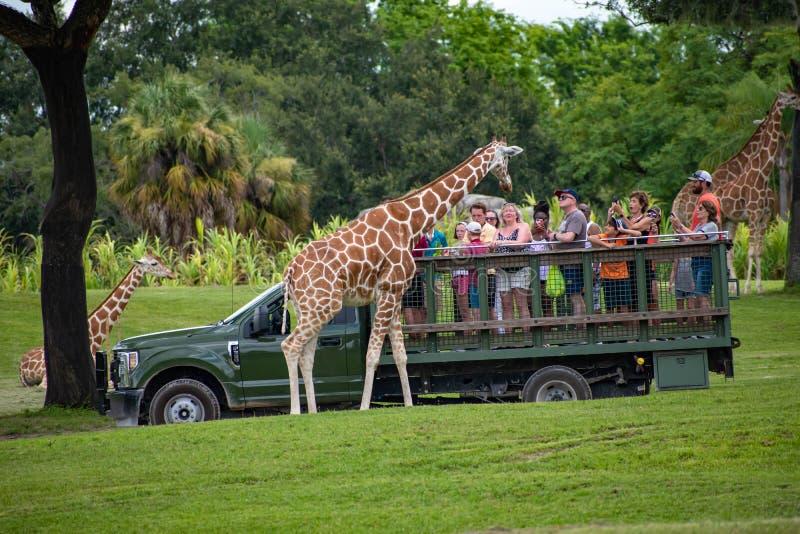 Giraf het wachten slabladeren van mensen die, safari bij Busch-Tuinen 1 genieten van stock foto