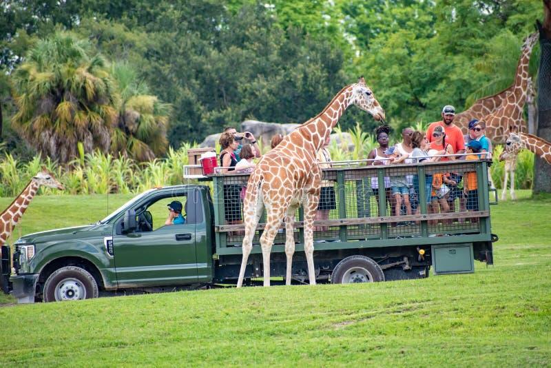 Giraf het wachten slabladeren van mensen die, safari bij Busch-Tuinen 4 genieten van stock foto's