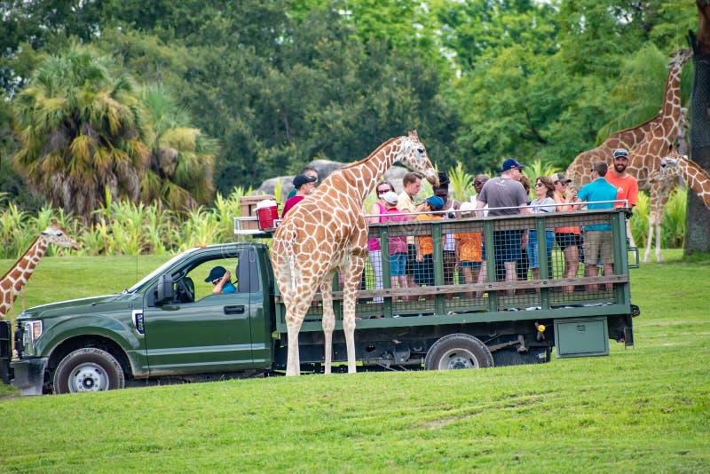 Giraf het wachten slabladeren van mensen die, safari bij Busch-Tuinen 3 genieten van royalty-vrije stock afbeelding