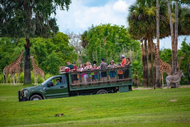 Giraf het wachten slabladeren van mensen die, safari bij Busch-Tuinen 12 genieten van stock afbeeldingen
