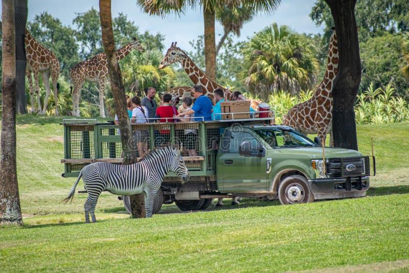 Giraf het wachten slabladeren van mensen die, safari bij Busch-Tuinen 2 genieten van stock afbeelding