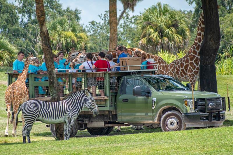 Giraf het wachten slabladeren van mensen die, safari bij Busch-Tuinen 5 genieten van royalty-vrije stock fotografie