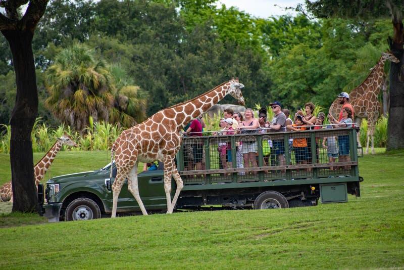 Giraf het wachten slabladeren van mensen die, safari bij Busch-Tuinen 17 genieten van royalty-vrije stock foto's