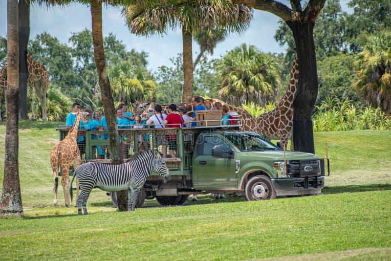 Giraf het wachten slabladeren van mensen die, safari bij Busch-Tuinen 4 genieten van royalty-vrije stock foto