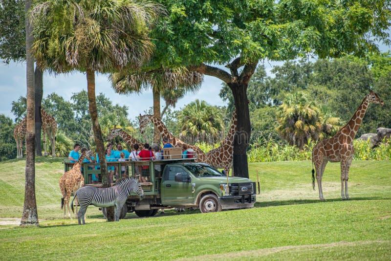 Giraf het wachten slabladeren van mensen die, safari bij Busch-Tuinen 1 genieten van royalty-vrije stock fotografie