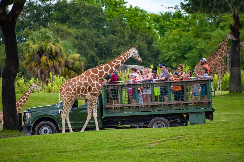 Giraf het wachten slabladeren van mensen die, safari bij Busch-Tuinen 16 genieten van royalty-vrije stock afbeelding