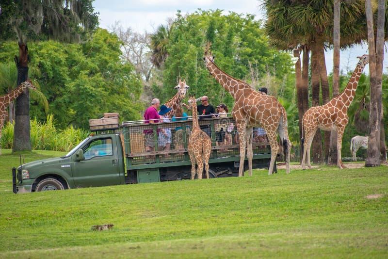 Giraf het wachten slabladeren van mensen die, safari bij Busch-Tuinen genieten van 1 stock foto