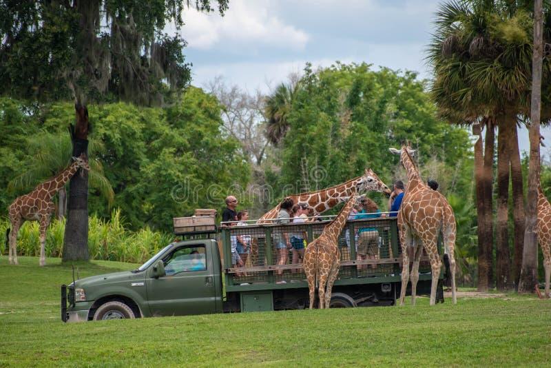 Giraf het wachten slabladeren van mensen die, safari bij Busch-Tuinen genieten van 4 stock fotografie