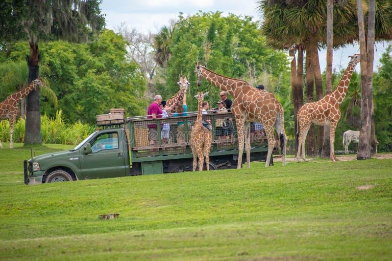 Giraf het wachten slabladeren van mensen die, safari bij Busch-Tuinen genieten van 3 stock afbeelding
