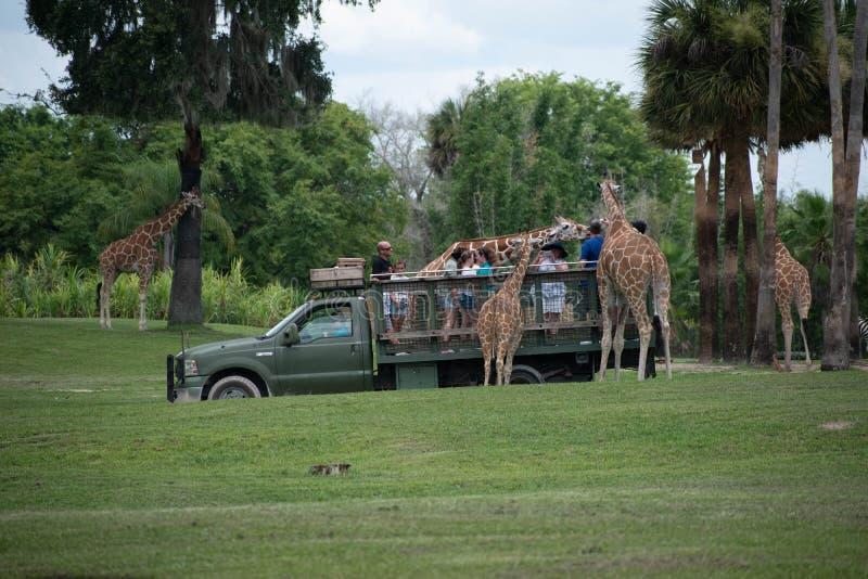 Giraf het wachten slabladeren van mensen die, safari bij Busch-Tuinen genieten van 1 stock fotografie