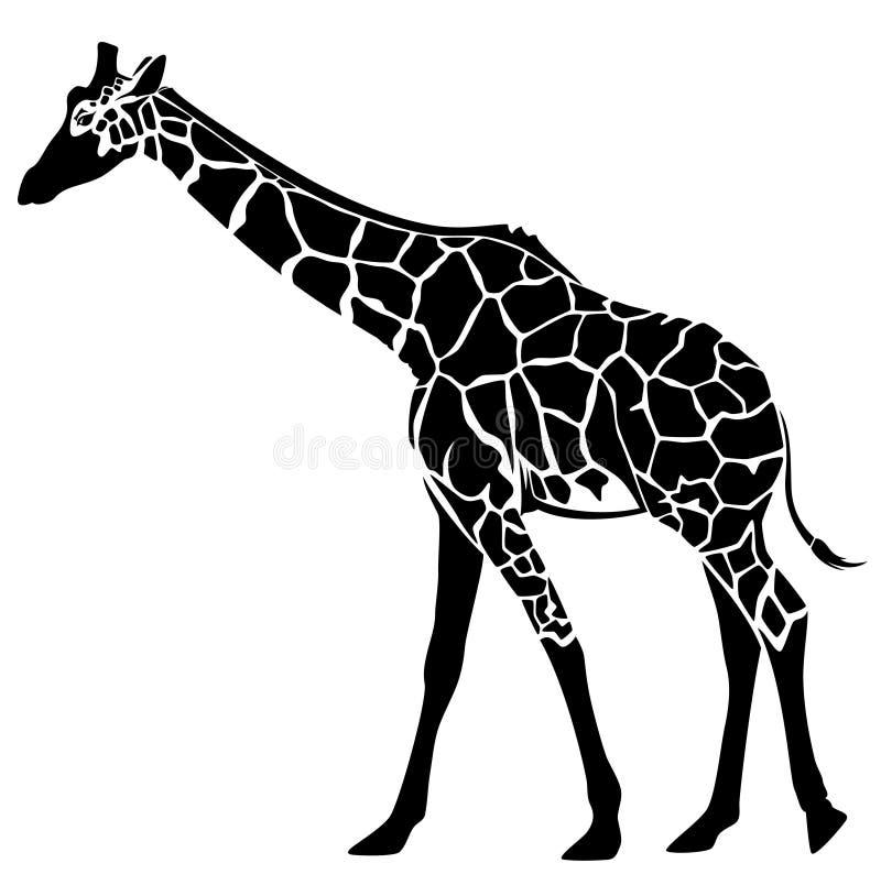 Girafa ilustração royalty free
