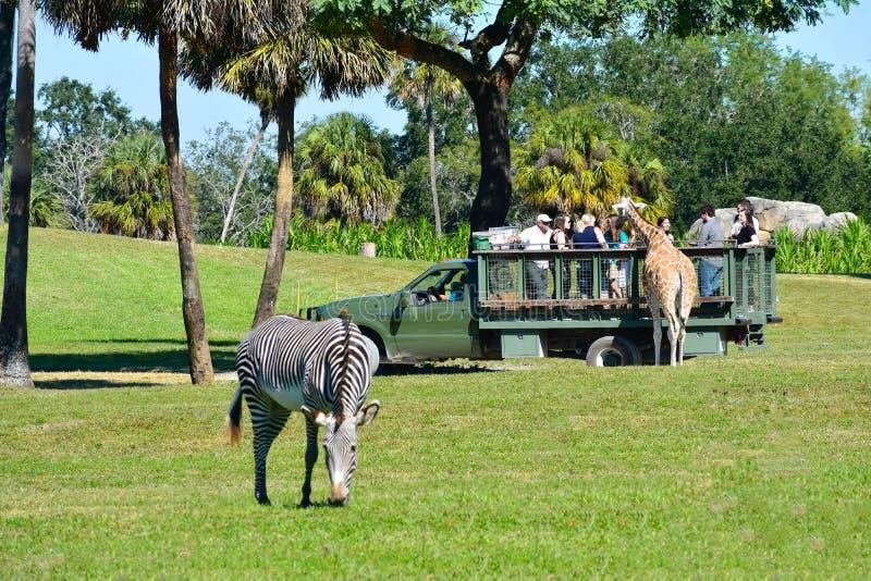 Girafa agradável com grupo de pessoas durante a excursão do safari Zebra defocused no primeiro plano em Bush G foto de stock royalty free