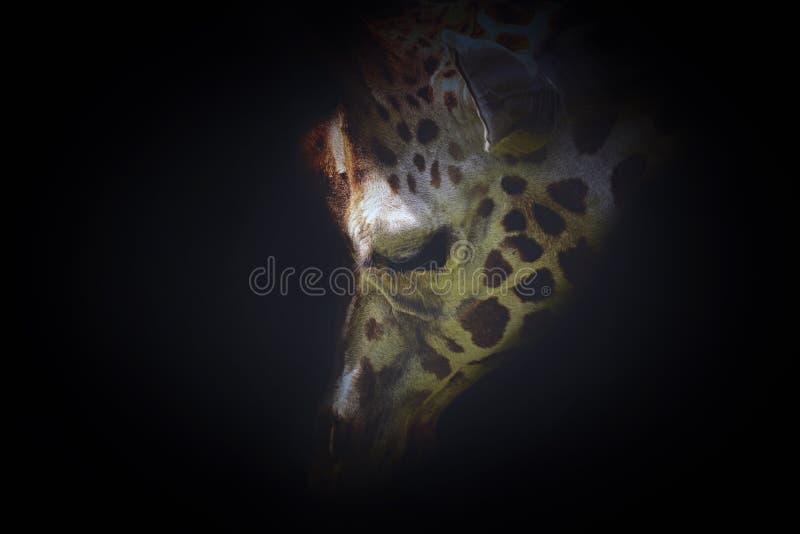 Girafa da cara do detalhe no preto imagem de stock