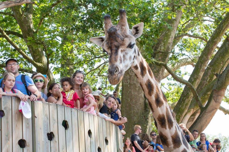 Girafa em um jardim zoológico com o público imagens de stock royalty free