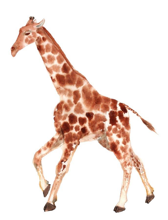 Girafa running da aquarela imagem de stock