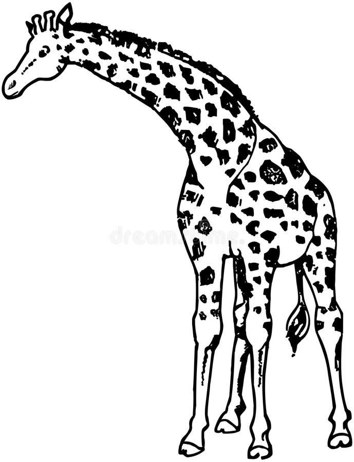 Girafe illustration libre de droits