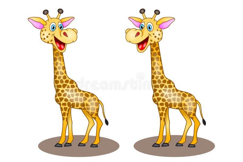Girafe de bande dessinée de deux vecteurs sur le fond blanc avec rire photos stock