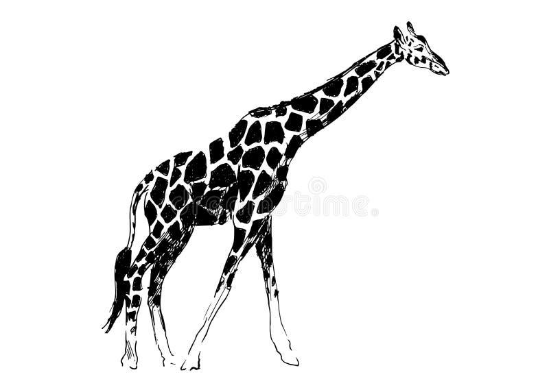 Girafe de dessin de main illustration stock