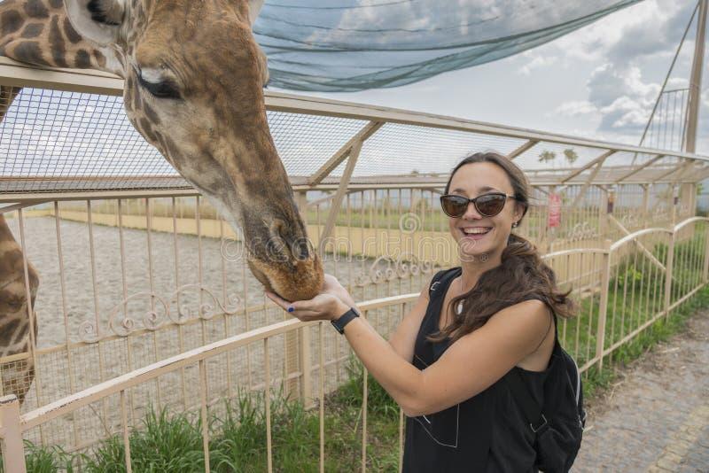 Girafe de observation et de alimentation de jeune femme heureuse dans le zoo La jeune femme de touristes attirante alimente la gi image libre de droits