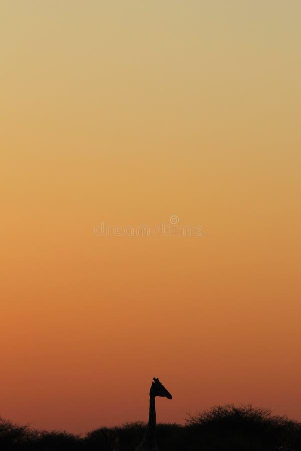 Girafe - fond africain de faune - silhouette simpliste d'une icône photo stock