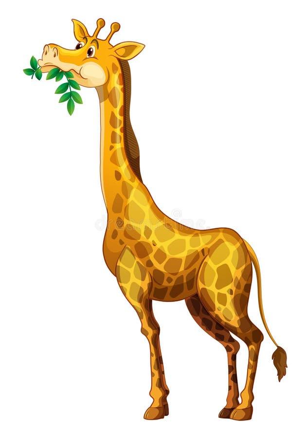 Girafe mignonne mâchant sur des feuilles illustration de vecteur