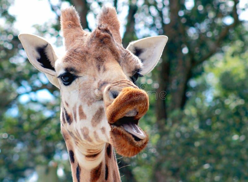 Girafe parlante photo stock