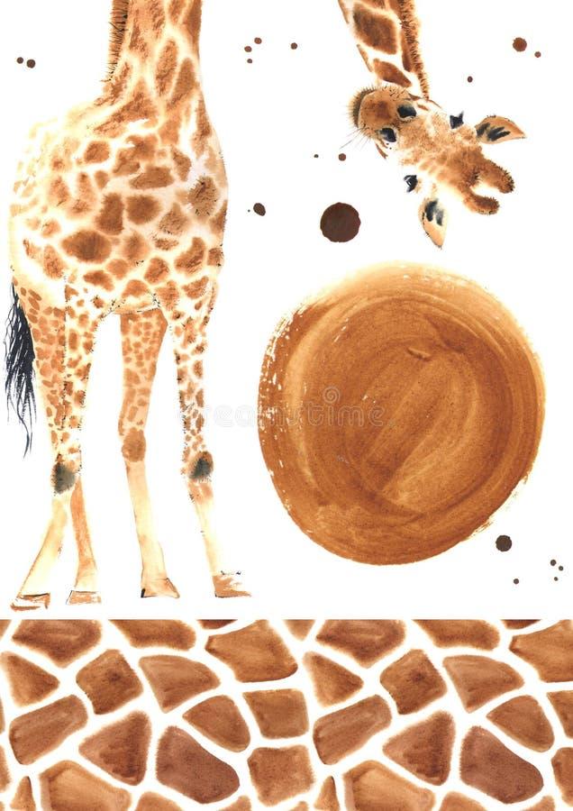 Girafe réaliste d'aquarelle images libres de droits