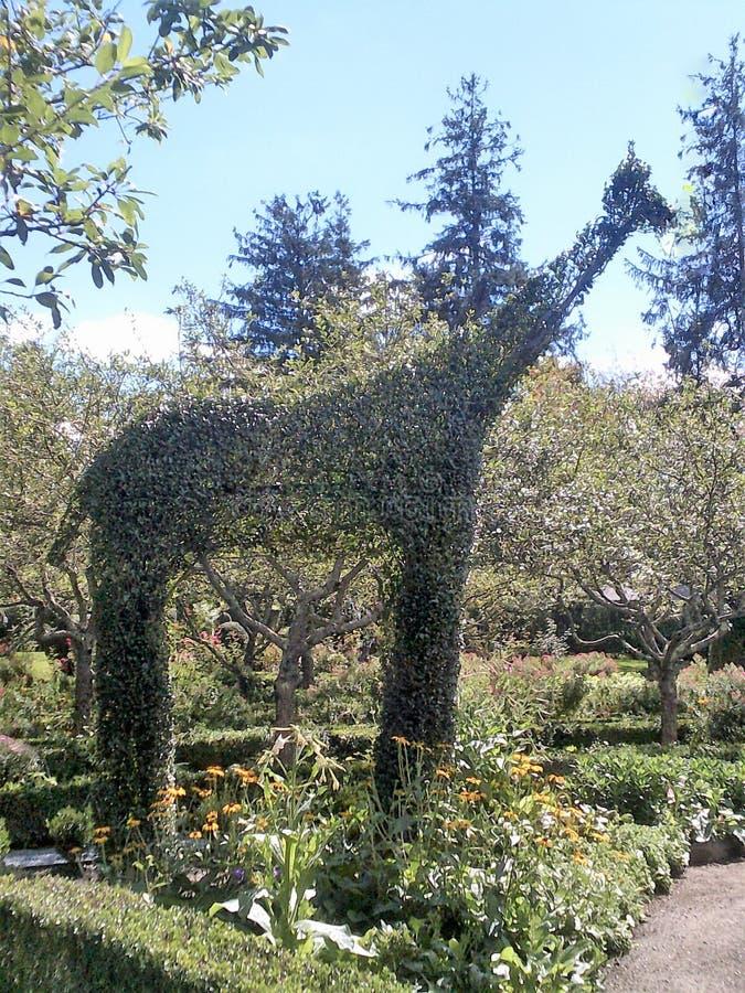 Girafe topiaire image stock