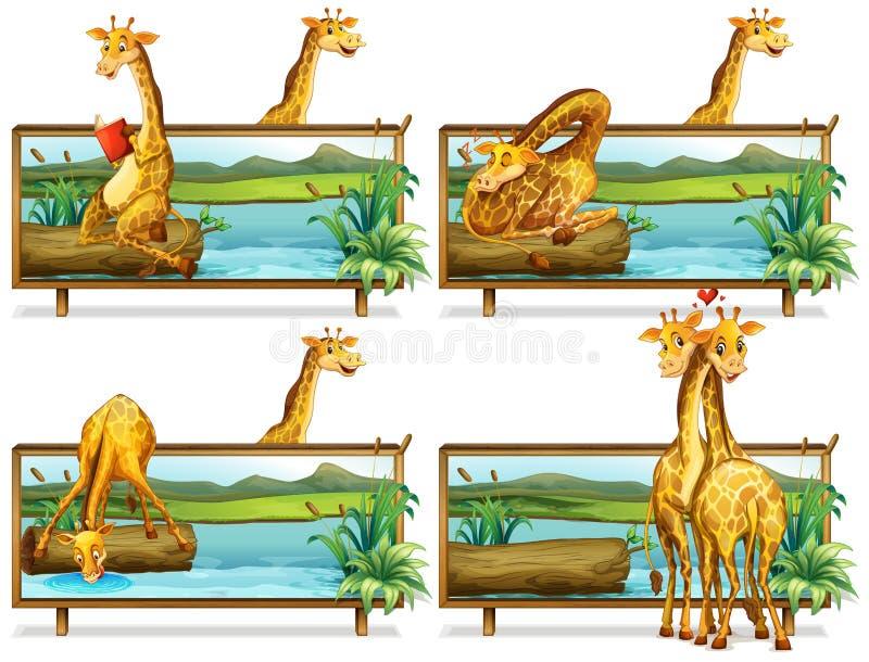 Girafes dans les cadres en bois illustration de vecteur