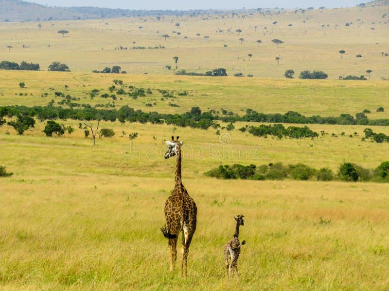 Giraff家庭 库存照片