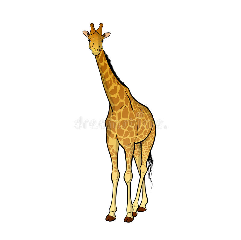 giraff royaltyfri illustrationer