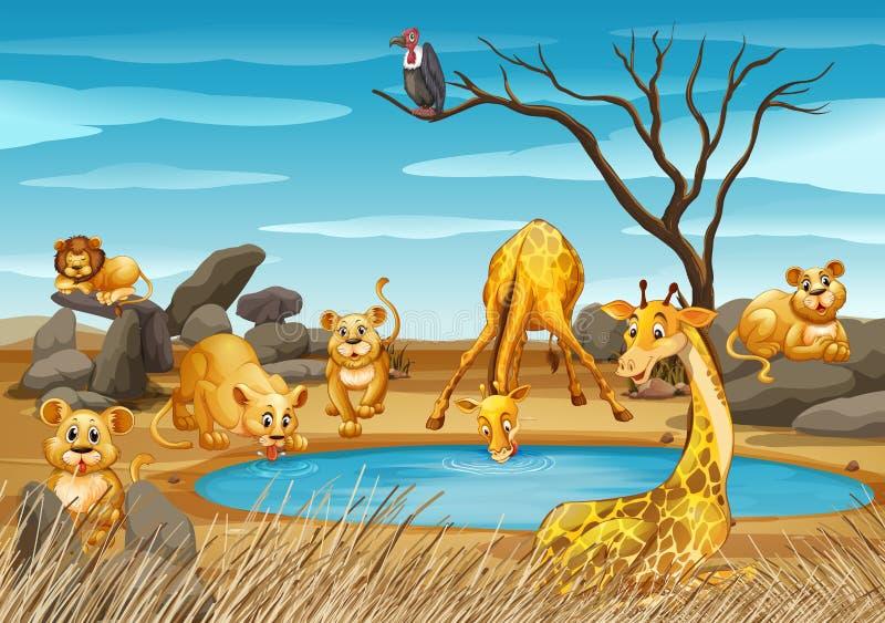 Giraff och lejon vid dammet stock illustrationer