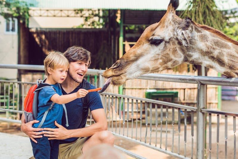 Giraffa di sorveglianza e d'alimentazione del figlio e del padre in zoo Bambino felice divertendosi con il parco di safari degli  immagine stock libera da diritti