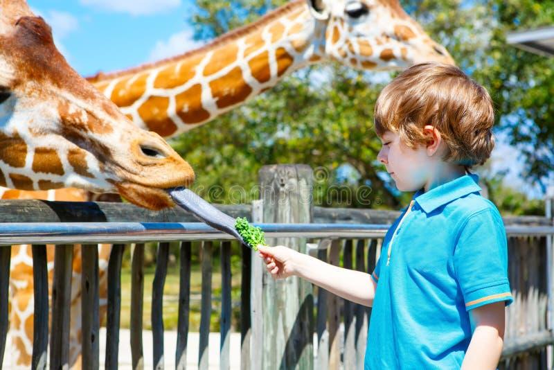 Giraffa di sorveglianza e d'alimentazione del ragazzo del bambino in zoo fotografia stock libera da diritti