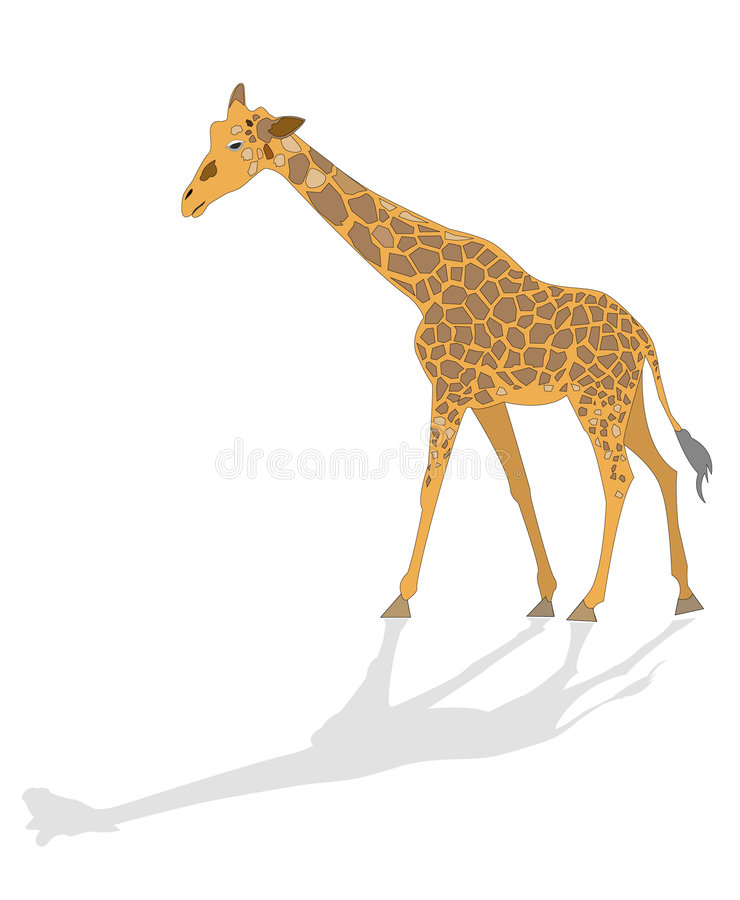 Giraffa illustrata