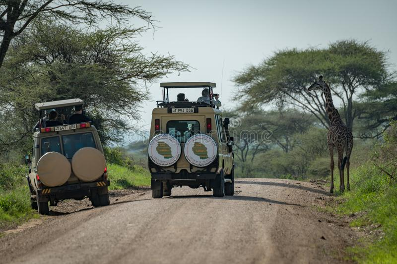 Download Giraffa Masai Fotografata Dai Turisti In Jeep Fotografia Editoriale - Immagine di erba, pianura: 117975306