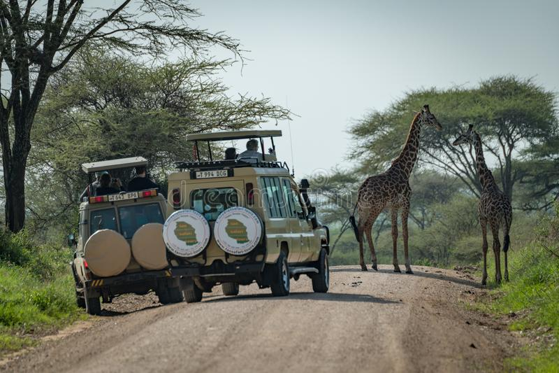 Download Giraffa Masai Guardata Dai Turisti In Jeep Fotografia Stock Editoriale - Immagine di alberi, macchiato: 117975358