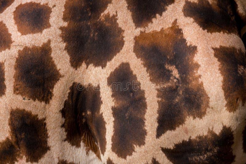 Giraffa tekstura obraz stock