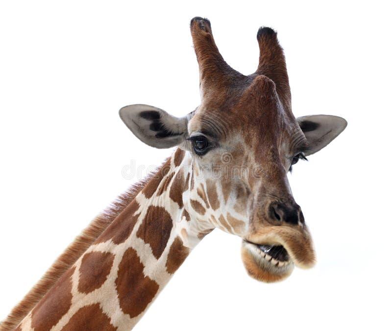 Giraffe πρόσωπο στοκ φωτογραφίες