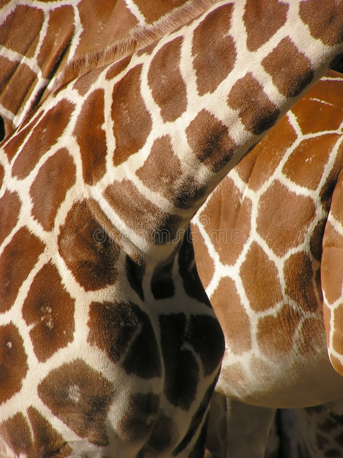 Download Giraffe πρότυπο στοκ εικόνα. εικόνα από γούνα, δομή, σημείο - 391271