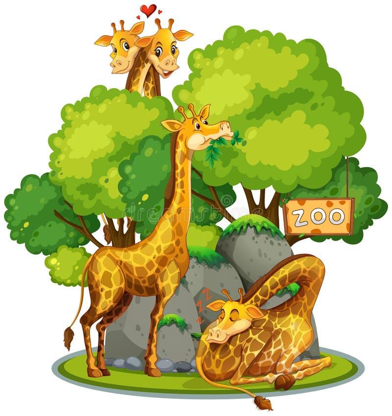 Giraffe στο ζωολογικό κήπο διανυσματική απεικόνιση