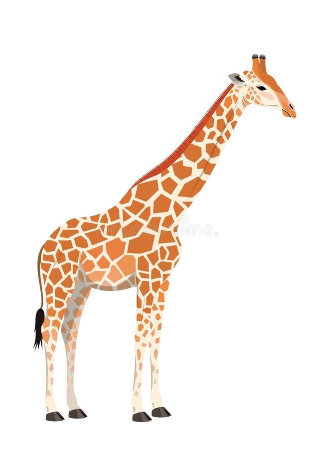 Download Giraffe stock vector. Image of africa, giraffe, hoof - 14403512