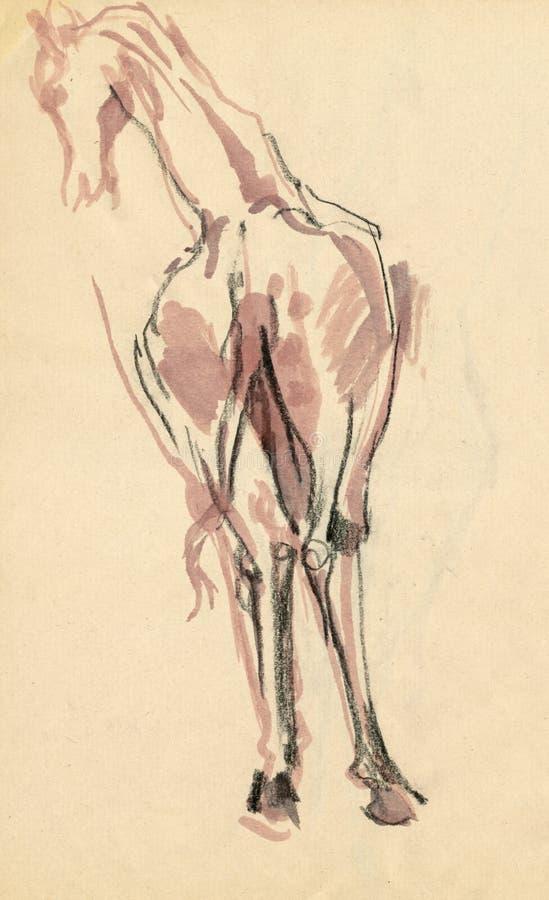 giraffe 3 de dessin illustration libre de droits